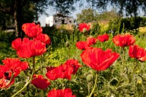 Flowers in a Walsall churchyard by Matt Murray
