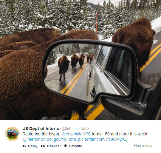 Twitter  Interior Restoring the bison, @YosemiteNPS ... - Google Chrome 05072014 213828