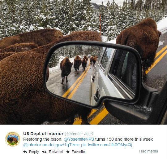 Twitter  Interior Restoring the bison, @YosemiteNPS ... - Google Chrome 05072014 213828